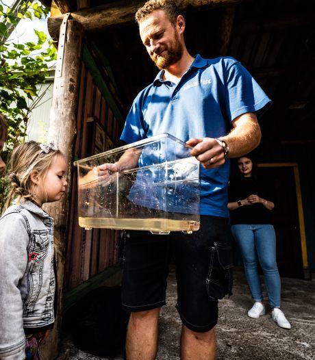 Waarom in Burgers' Zoo de vlag uit gaat nu ze zelf krabbetjes hebben gekweekt: 'Dit gaan we delen'