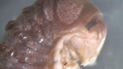 Dit is een nieuwe schimmelsoort, vernoemd naar Twitter