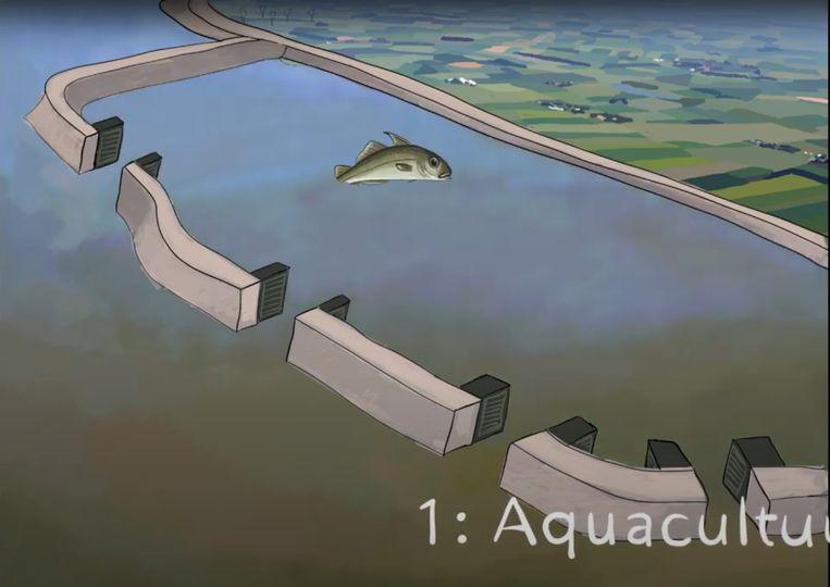 Fase 1: het water van de Westerschelde treedt binnen. Beeld