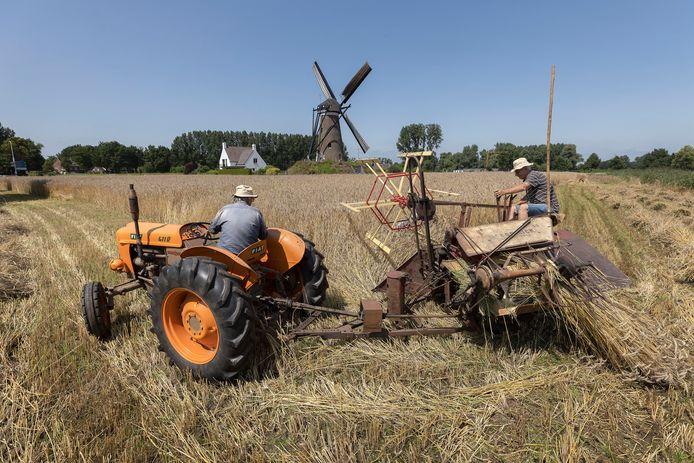 Bij de molen De Roosdonck in Nuenen  is winterrogge ingezaaid die  wordt geoogst. Leo van de Sande op de tractor en Bert van Gelder als bijrijder.