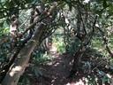 Hier lagen Duitse soldaten verscholen tussen de varens en de boomwortels.