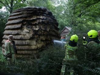 Brandstichting in kasteeldomein Hof ter Saksen: reuzenbijenkorf raakt zwaar beschadigd