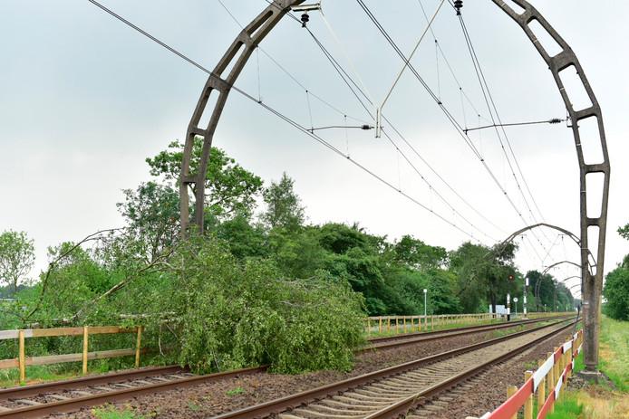 Bomen op het spoor tussen Utrecht en Hilversum, ter hoogte van Maartensdijk.
