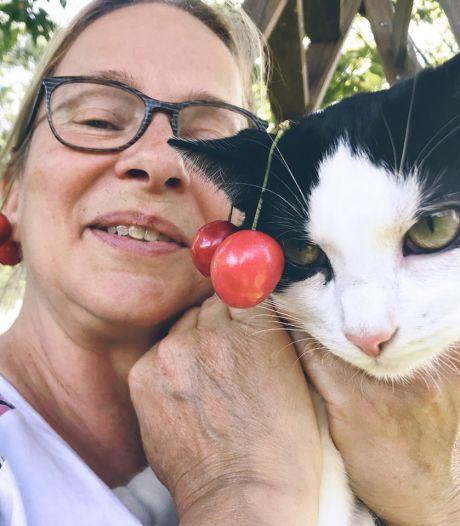 Jolanda fotografeerde 365 dagen haar katten: hoe drie Rotterdamse zwerfkatten naar Zeeland verhuisden