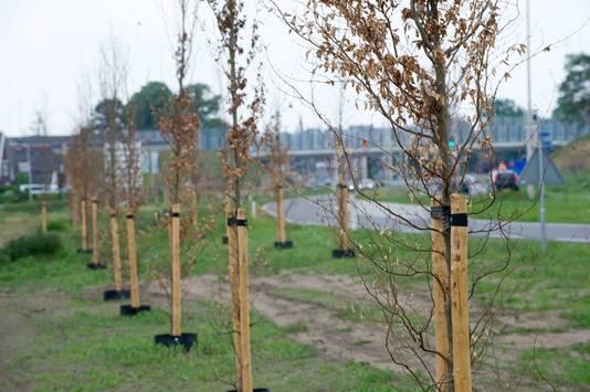 Met nieuwe aanplant wordt gewacht tot na de zomer, jonge boompjes overleven de droogte moeilijker. Foto ter illustratie.