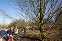 Ruim vijf jaar geleden is een metershoge haagbeuk geplaatst in het park dat gerealiseerd is op de voormalige sportvelden Helbergen in Zutphen.