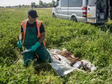 Weghalen vervuiling Westdijk kost 20 tot 30 miljoen euro