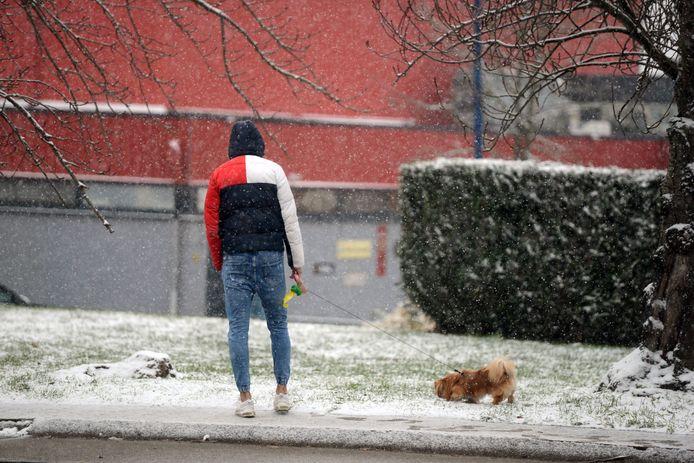 Sneeuw in regio Leuven: ook de hondjes genieten van de sneeuw.