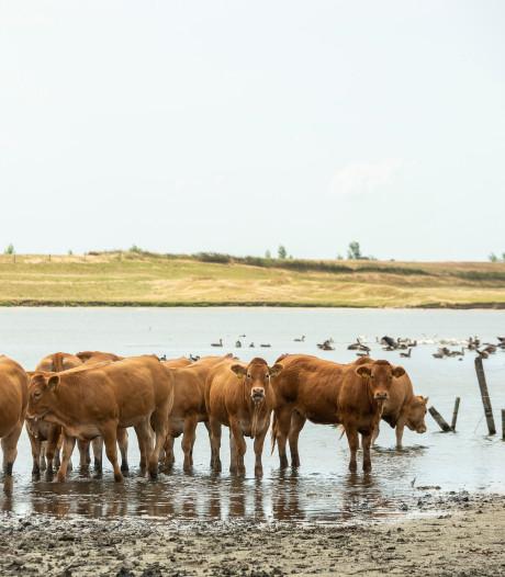 Spoedoverleg boeren en provincie over stikstof