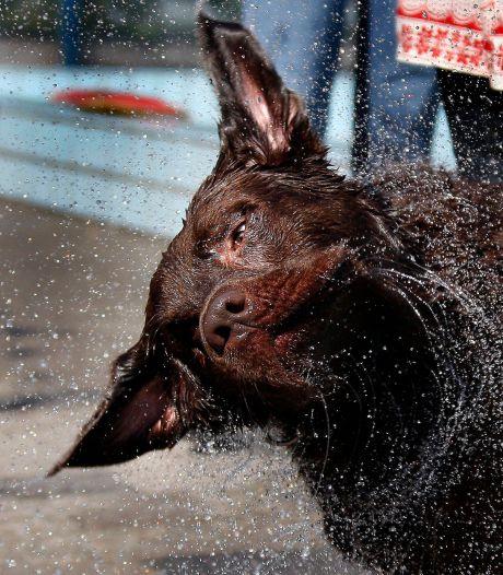 Hond krijgt vishaak in snuit, dierenziekenhuis waarschuwt