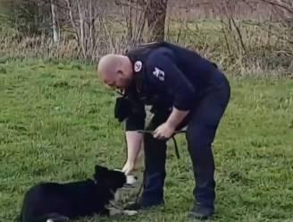 Loslopende hond 'Zorro' wordt beste vrienden met Gentse agent