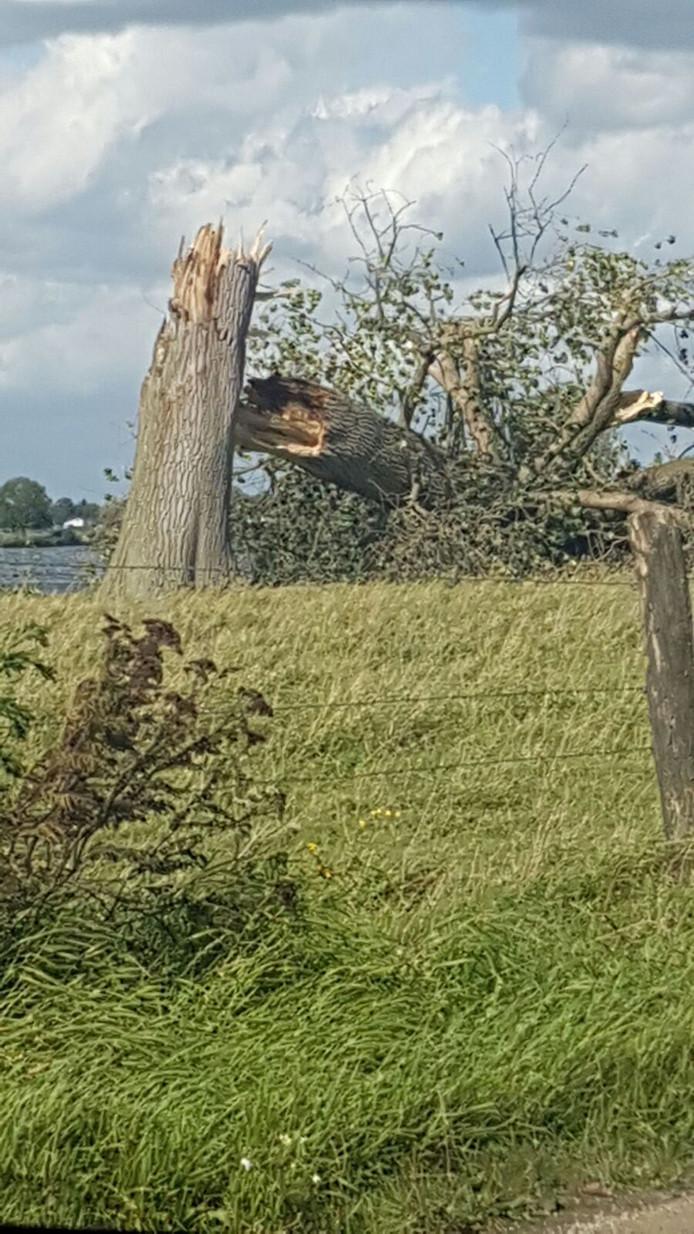 Een bakenboom aan de Maas bij Megen heeft het begeven.