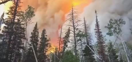 Vlammen vernietigen bossen in Arizona