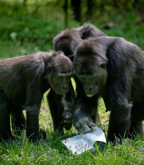 Slapen tussen de leeuwen en apen: Burgers' Zoo heeft serieuze plannen voor een camping