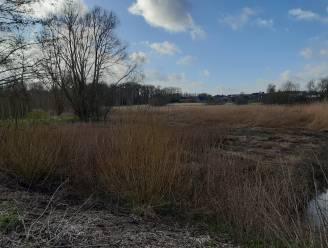 Herinrichting overstromingsbekken Moerasstraat moet wateroverlast bestrijden en waterbeschikbaarheid bij droogte verhogen