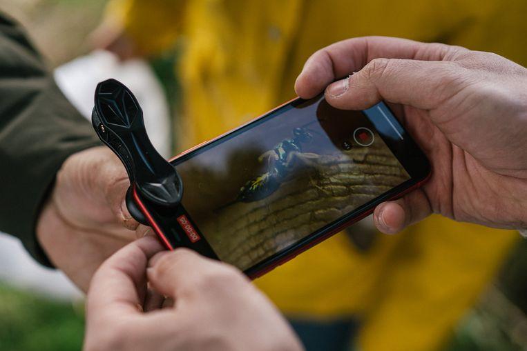 Een macro-lens op je smartphone brengt insecten verbazend dichtbij.  Beeld Wouter Van Vooren