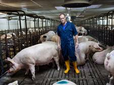 Hoe ver gaat deze varkensbaron?