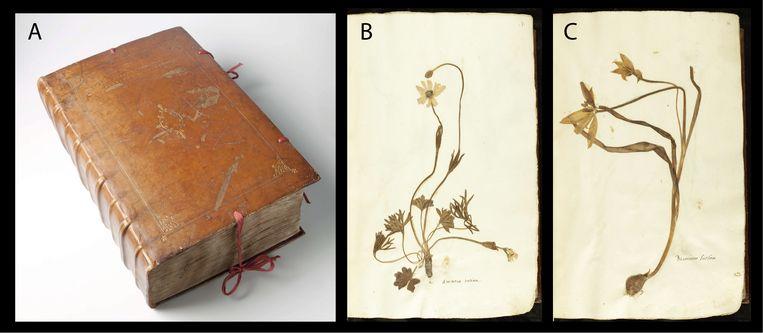 Het En tibi-herbarium, met twee voorbeelden van ingeplakte planten. Beeld Naturalis