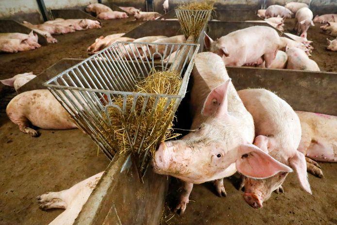 Minder varkens betekent minder mest en minder mestfabrieken.