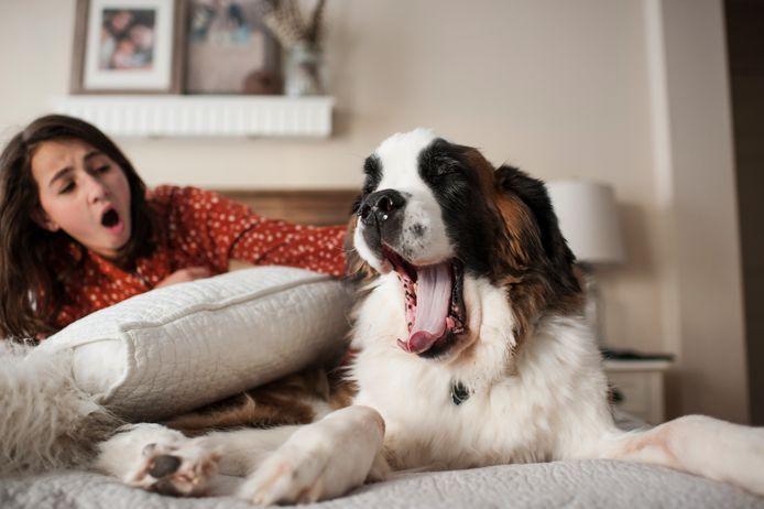 Beeld ter illustratie, honden imiteren mensen die geeuwen.