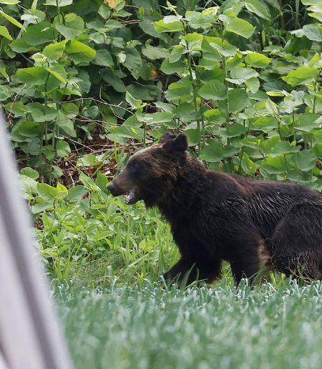 Un ours tente de s'inviter à la première épreuve des JO