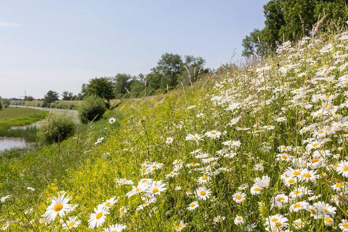 Op de dijken komt meer ruimte voor biodiversiteit.