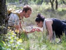 Door de knieën om 28 soorten mieren te zien
