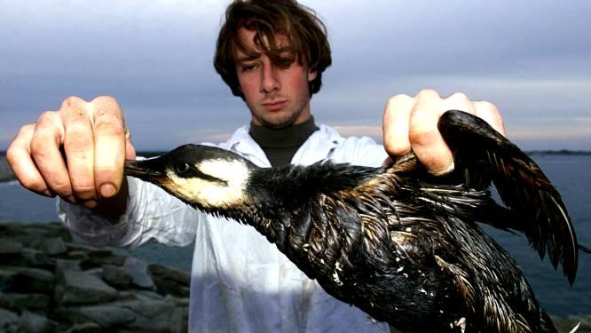 20.000 dode zeevogels spoelen aan langs Nederlandse kust