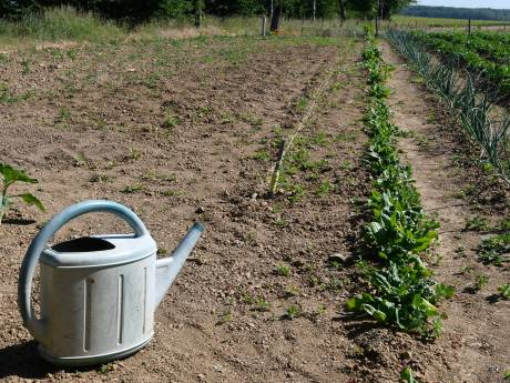 """La sécheresse de 2020 reconnue """"calamité agricole"""" en Wallonie"""