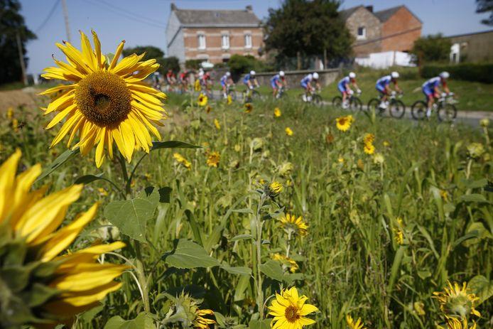 Het peloton in actie tijdens de zesde etappe van de Benelux Tour.