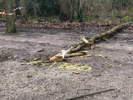 Had Slot Zuylen dodelijk ongeluk met gevallen boom moeten voorkomen? 'De natuur is grillig'