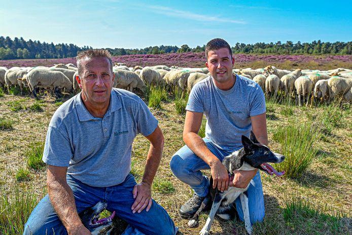 John van Driel (links) met zijn zoon Luc op de Kalmthoutse Heide nabij Huijbergen in de gemeente Woensdrecht. In opdracht van Staatsbosbeheer zorgt het bedrijf van Van Driel voor de begrazing door een kudde Kempische heideschapen.