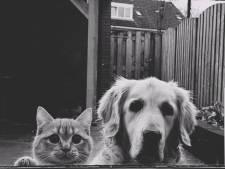 Waddinxveen krijgt 'resort' voor honden en katten