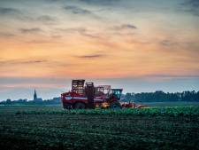 Bieten en aardappelen: oogst van 's morgens vroeg tot 's avonds laat