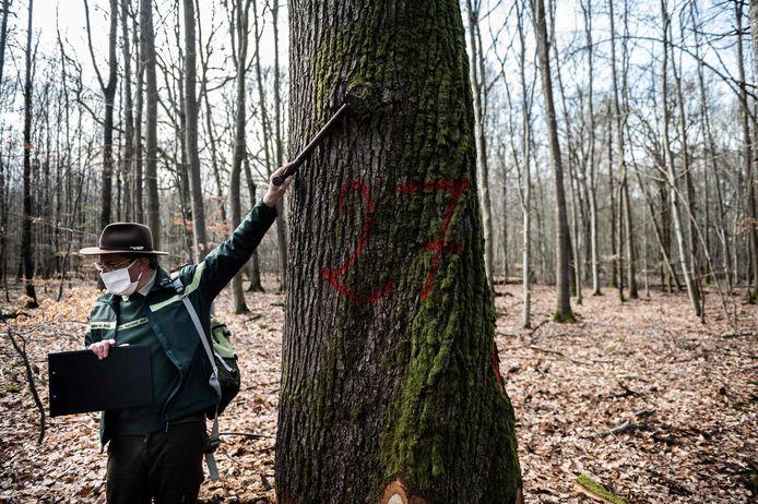De bomen die voor de Notre-Dame worden gebruikt, zijn gemarkeerd.