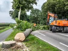 Niemand lijkt het te willen en tóch worden bomen langs weg tussen Mook en Milsbeek gekapt