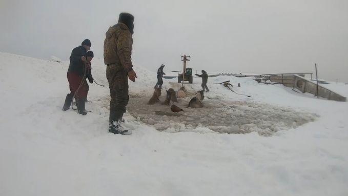 Verdrinkende paarden gered uit ijskoud water