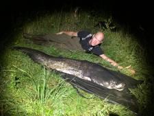 Enschedeër is record alweer kwijt: nog grotere monstervis gevangen