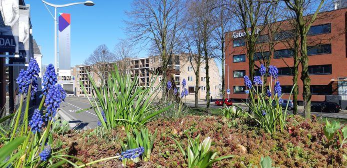 Op het bushokje aan de Vlaszak in Breda bloeien de planten en bloemen.