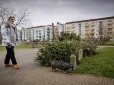 Uit huis verdreven kerstbomen altijd een wat tragische uitstraling