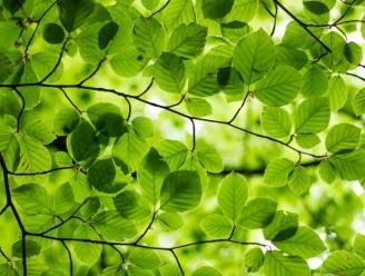Eeklo wil 1.000 bomen planten tegen 2024