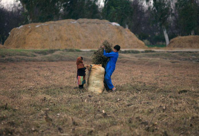 Les conditions de vie des enfants, et particulièrement des filles, sont régulièrement pointées du doigt au Pakistan. Des fillettes de parfois moins de 10 ans sont régulièrement violées et réduites en esclavage. Les enfants de familles chrétiennes sont les plus visées: 1000 d'entre elles y sont enlevées et mariées de force chez année.