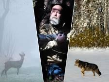 Natuurfotograaf fotografeert door corona nu reeën in plaats van wolven: 'Erg? Ik vind het geweldig'
