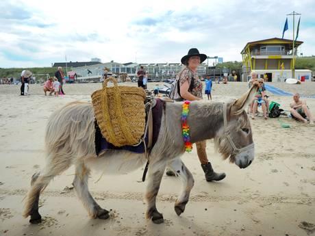 Ondanks verbod loopt ezel Boets toch op het Domburgse strand
