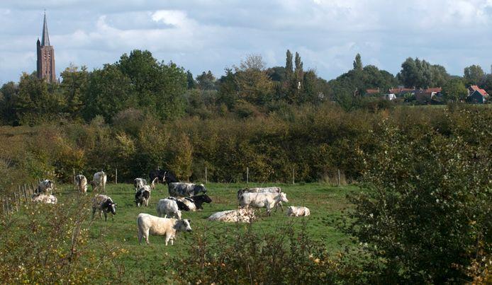 Het heggengebied bij Nisse, één van de natuurgebieden van Natuurmonumenten in de Zak van Zuid-Beveland.