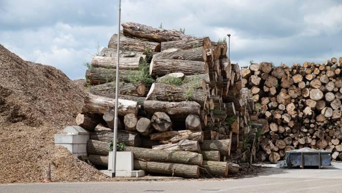 Onderzoek: biomassa zorgt voor hogere uitstoot dan kolen