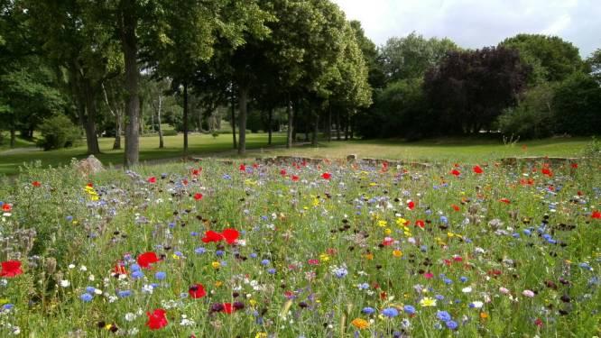 Gemeente deelt 250 zakjes bloemenzaad uit om leefomgeving van bij te verbeteren