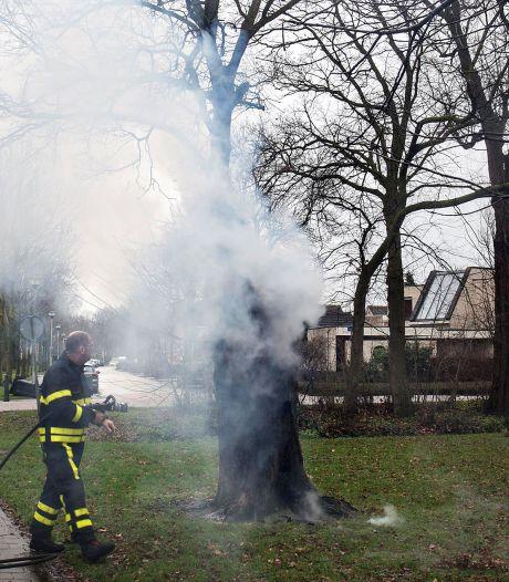Vuurwerkschade in West-Brabant in beeld: van verminkte kat tot jaarlijkse vernieling bushokjes