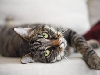 Miljoenen prooien per jaar, maar kat richt toch geen ecologische ravage aan