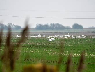 Privaat grootgrondbezit op het Vlaamse platteland blijft een adellijke kwestie